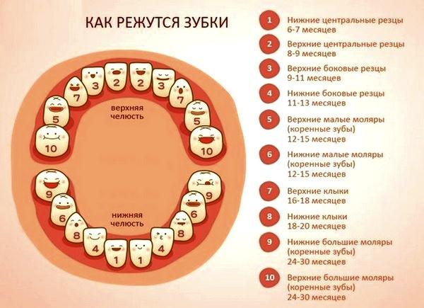 Если первыми зубами появились
