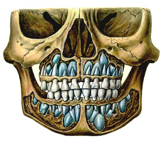 и прорезывание зубов